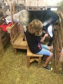 Sadie milking Georgia, 2014